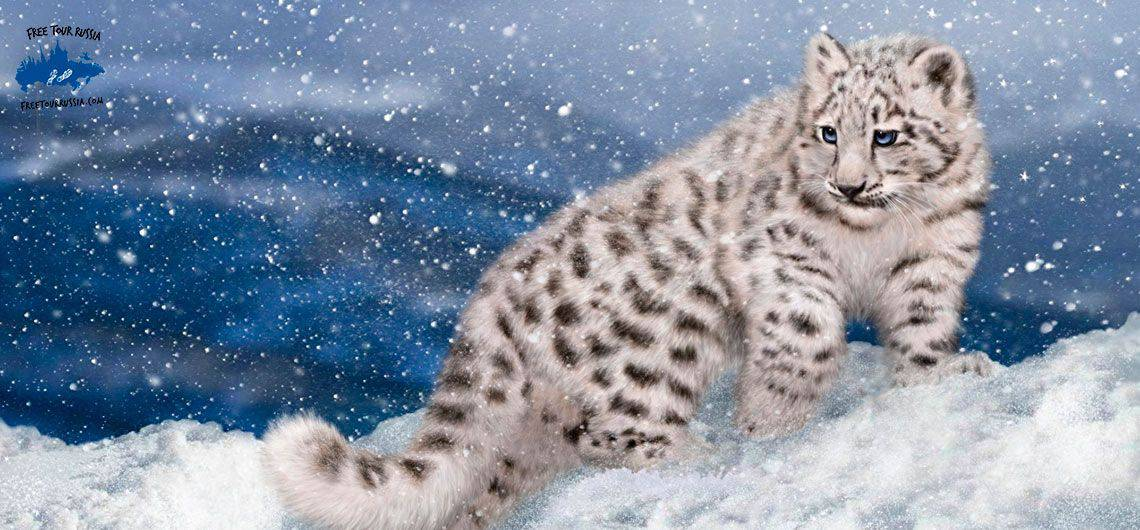 sayano-shushenski-home-of-the-snow-leopard