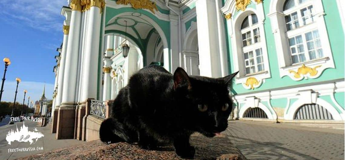 What to see at The Hermitage museum. The cats of the Hermitage